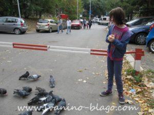 hranimo golubove